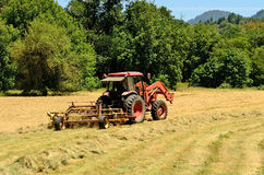 Windrow Rake. Agriculture tractor pulling a rotory bar tine rake through a field of cut grass hay to windrow for the baler for winter livestock feed Royalty Free Stock Photography