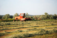 Windrowed Hay. Wind rower sitting in a field of windrows drying for baling Royalty Free Stock Photography