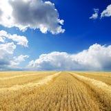 windrows хлебоуборки Стоковые Изображения RF