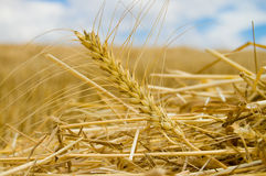 Windrows Royalty Free Stock Photos