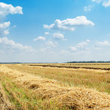 Windrows on field after harvesting Stock Image