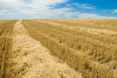 Windrows5 Royalty Free Stock Image