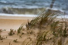 Winds blowing over grass on beach stock image