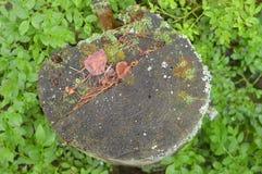 Windschutz, die gestolperten-unten und Schnittbäume lizenzfreies stockfoto