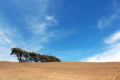 Windsept trees standing on a ploughed field, Southland, New Zeal Royalty Free Stock Image