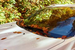Windshield with fallen leaves. Windshield of a car with fallen leaves on it Stock Photography