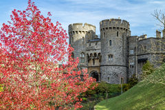 Windsor castle. Exterior with nice autumn leaves Royalty Free Stock Photo