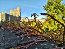 Windsor/Groot-Brittannië - November 02 2016: Muren, gebouwen en torens van Windsor Castle op een zonnige dag royalty-vrije stock fotografie