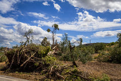 Windstorm in the countryside Stock Images