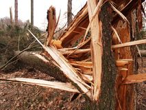 Windstorm damage. Tree broken and crushed by serious windstorm Royalty Free Stock Photos