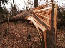 Windstorm damage. Tree broken and crushed by serious windstorm Royalty Free Stock Image