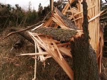 Windstorm damage. Tree broken and crushed by serious windstorm Stock Images