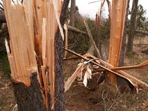 Windstorm damage. Tree broken and crushed by serious windstorm Stock Image