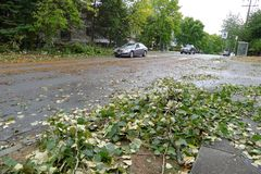 Windstorm Damage. A windstorm assaulted Vancouver in Aug 29, 2015 Royalty Free Stock Image