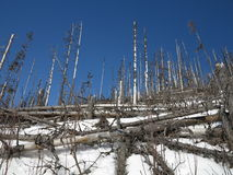 Windstorm in forest. Catastrophe in forest after windstorm Stock Photography