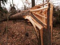 Windstorm schade Royalty-vrije Stock Afbeelding