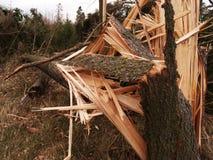 Windstormschaden Stockbilder