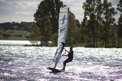 Windsurf and eucalyptus tree Stock Photography