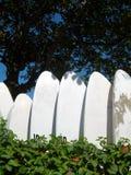 Windsurf las tarjetas en las zonas tropicales fotografía de archivo