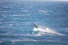 windsurfer Zdjęcie Stock
