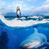 Windsurfer in ocean and wild shark underwater. Separated image. Story about ocean and windsurfer on a board under sail and angry hungry bull-shark swiming stock photography