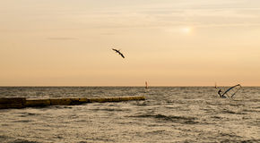 Windsurfers κατά τη διάρκεια της αυγής Στοκ Εικόνες