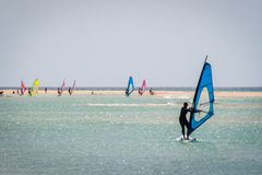 Windsurfers on the beach. Group of windsurfers playing Royalty Free Stock Photos