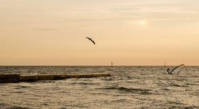 Windsurfers durante l'alba Immagini Stock