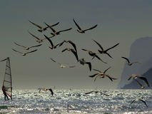 The windsurfers and the seagulls Stock Photography