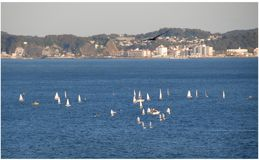 Windsurfing. On Sagami Bay with cityscape in the background, Japan Royalty Free Stock Photography