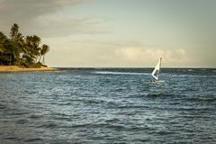 Windsurfing sail by the sea at sunset with palm trees in the background in Praia do forte, Bahia, Brazil royalty free stock photography
