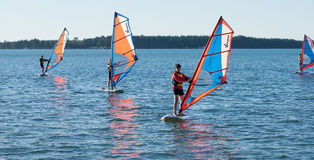 Windsurfing on Tauranga Harbour. Stock Photography