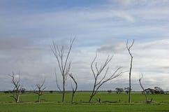 windswept Stockbilder