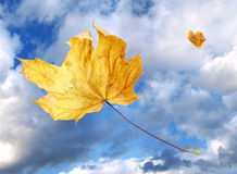 Windswept autumn leaves Stock Photos
