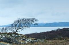 Windswept Baum Stockbild