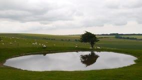 Windswept Baum durch einen Teich auf den Südabstiegen lizenzfreie stockbilder