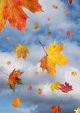 Windswept bladeren Stock Foto