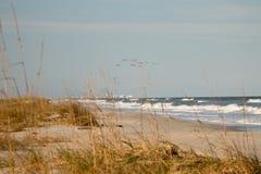 Windswept Day Stock Photo