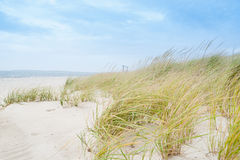 Windswept environment. Windswept beach, typical Cape Cod coastal environment stock image