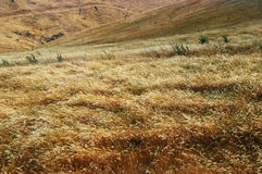 Windswept fields Royalty Free Stock Photography