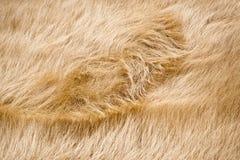 Windswept Grass Stock Image