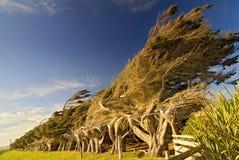 Windswept kustbomen op Hellingspunt in Nieuw Zeeland stock foto's