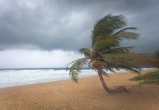 Windswept Palm tree Royalty Free Stock Photo