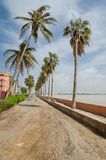 Windswept palm trees in front of low wall at the sea in St Louis, Senegal, Africa Royalty Free Stock Photo