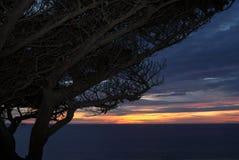 Windswept träd på solnedgången Arkivfoton