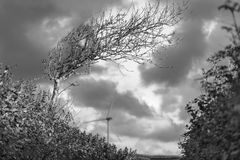 Windswept trädvindturbin royaltyfria foton