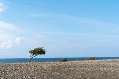 Windswept tree and bushes by a coastline Royalty Free Stock Photography