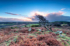 Windswept Tree on Helman Tor Royalty Free Stock Photos
