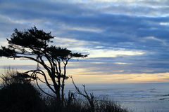 Windswept Trees Silhouetted Against a Cloudy Sunset at the Beach Stock Photo
