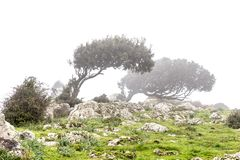 Windswept tress in the fog. Landscape with windswept trees in the fog in Sardinia, Italy royalty free stock image